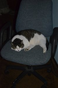 cat-chair